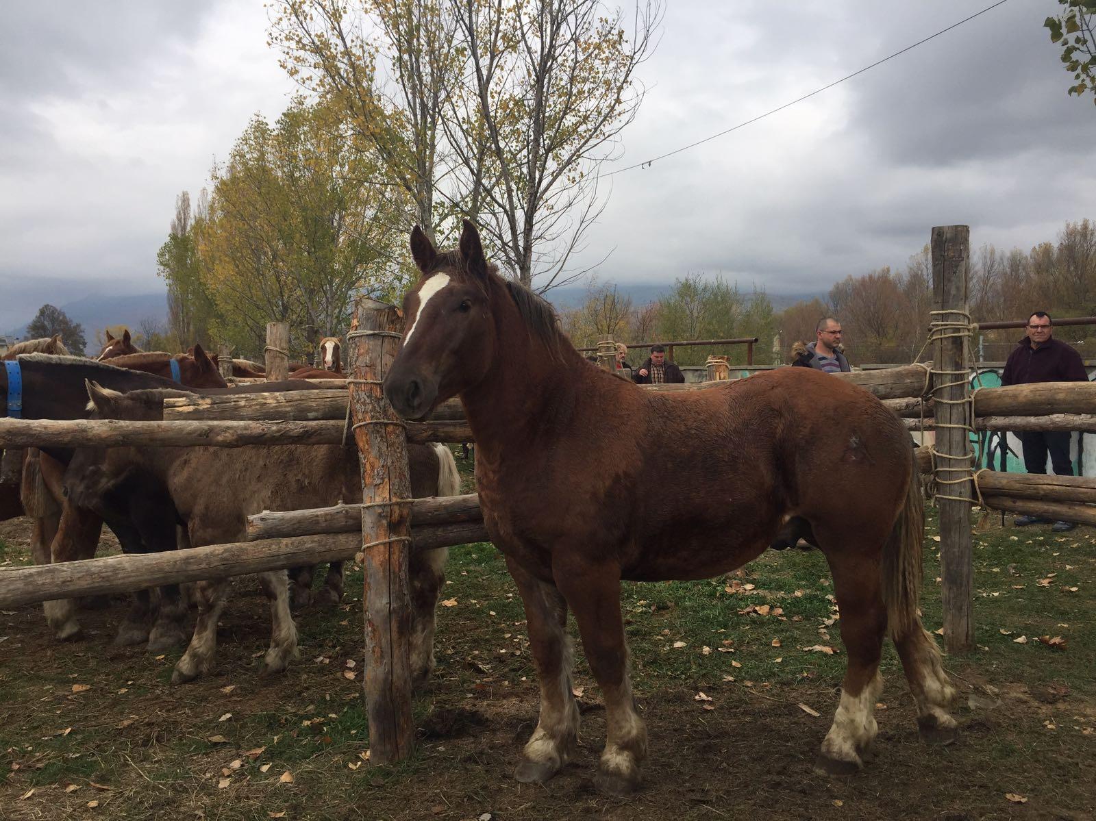 Fira-del-Cavall-de-Puigcerda-01
