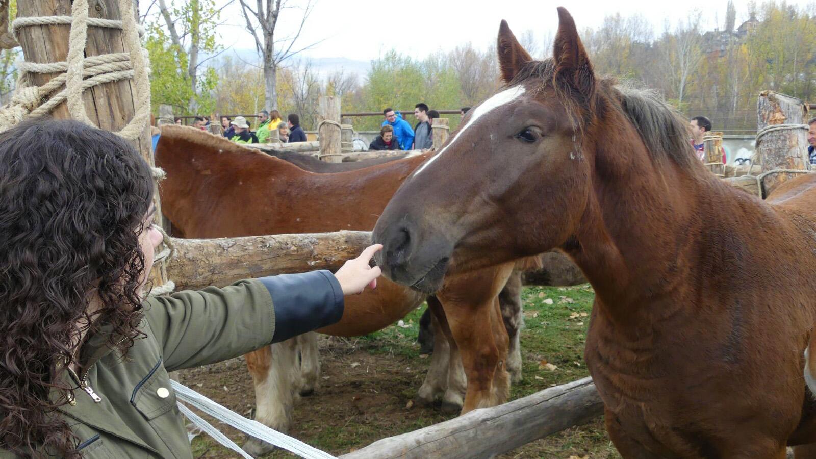 cavall-fira-sant-antoni-2017-dama